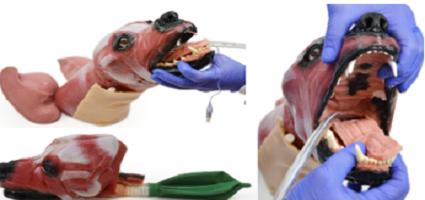 intubacion-canina